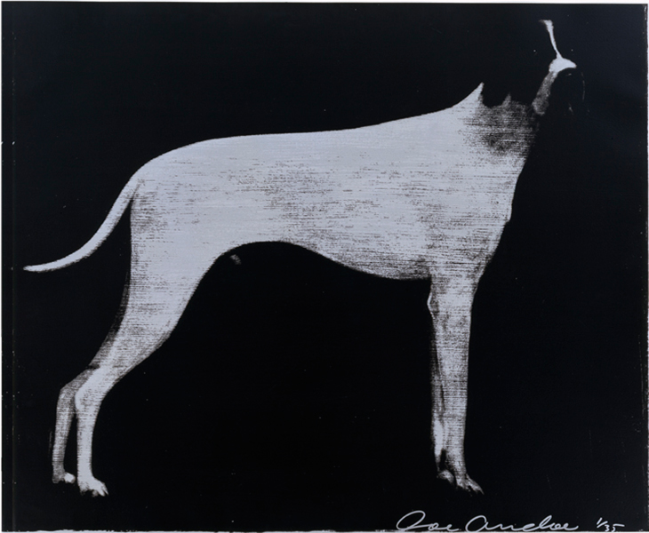 Large Dog (Graphite on Silver)