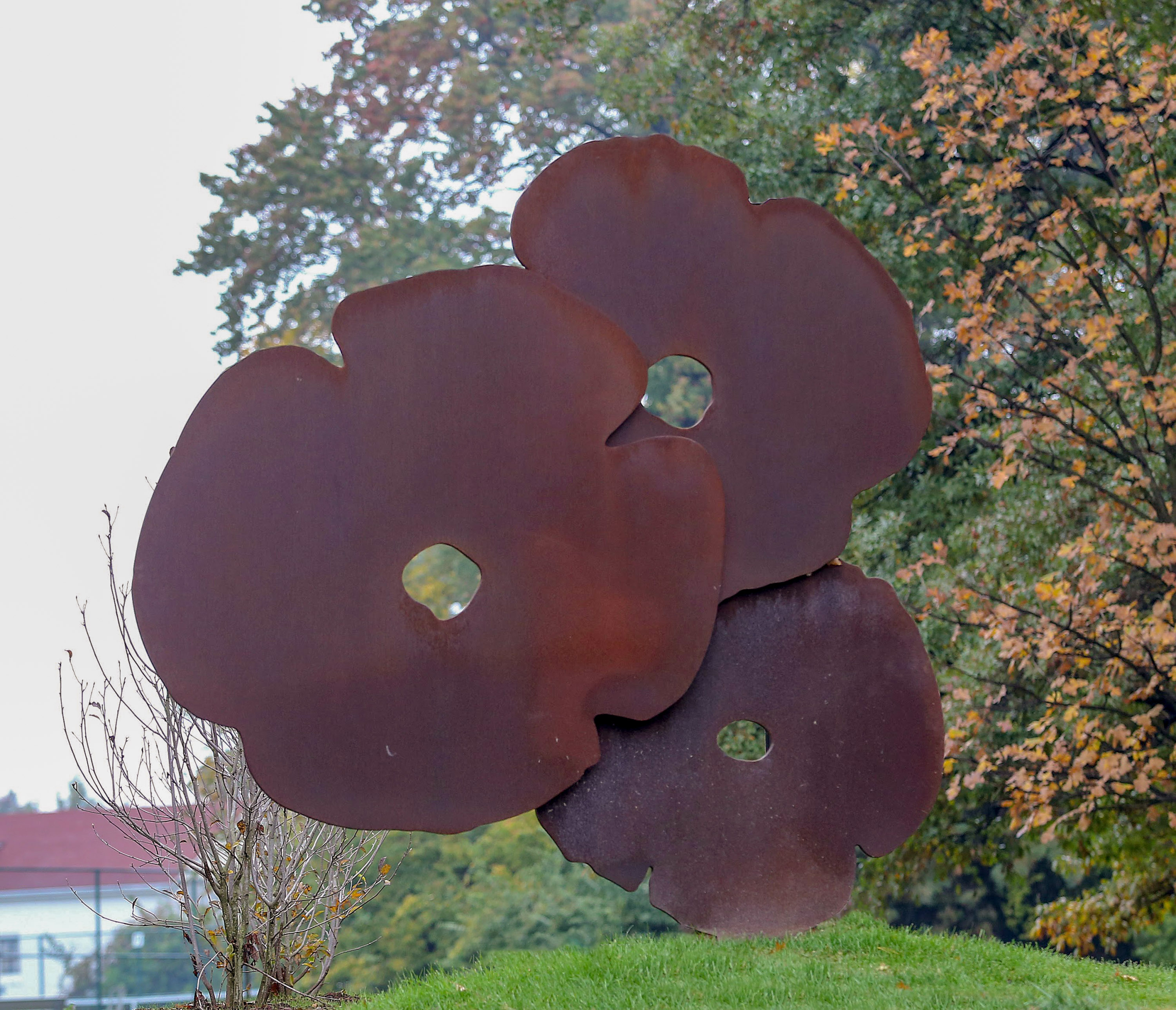 Big Corten Poppies, 2015